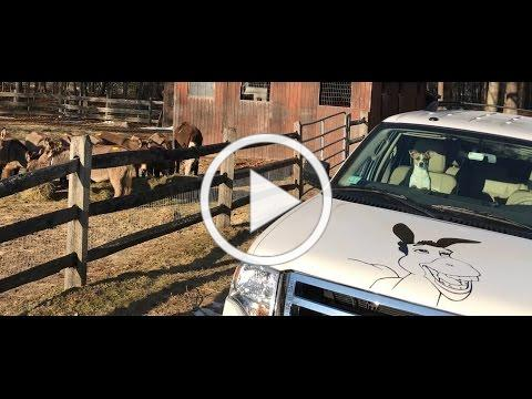 ERN Donkey Stampede