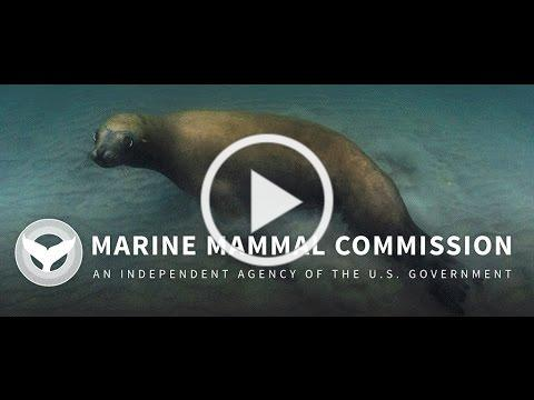 The Marine Mammal Commission
