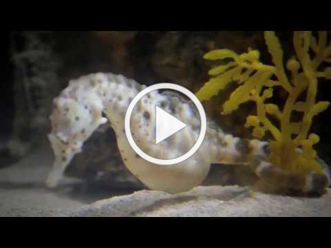 Georgia Aquarium Trip 2017