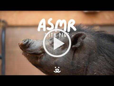 ASMR | pig, horse, tortoise, bunny & kittens enjoy a favorite snack at Best Friends Animal Sanctuary