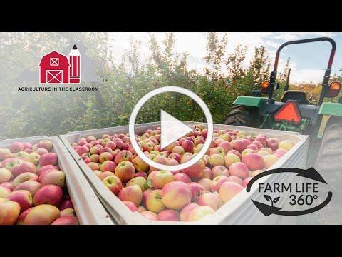 Farm Life 360º - Virginia Apple Orchard