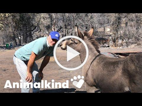 Donkey runs to owner after surviving wildfire | Animalkind