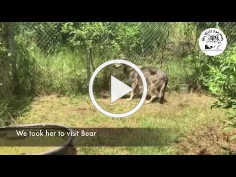 Destiny's home with Bear