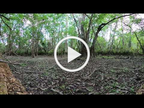 Enter a DRIED UP SWAMP with this 360 VR View!
