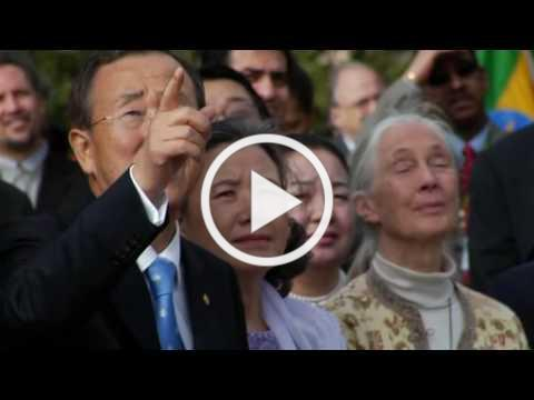 INTERNATIONAL DAY OF PEACE PROMOTIONAL VIDEO