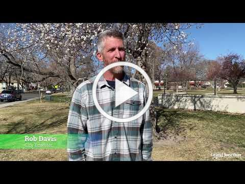 Get to Know the Grand Junction Forestry Division