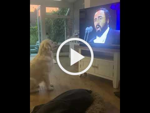Dog Singing along to Pavarotti - BestDogsLifeUK - Nessun Dorma - Funny Dog Pet Video - Opera Dog