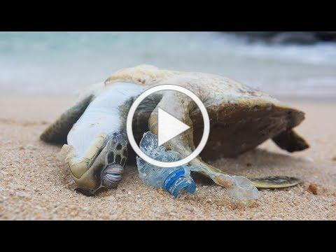 POWERFUL VIDEO: Why We Need to Stop Plastic Pollution in Our Oceans FOR GOOD   Oceana