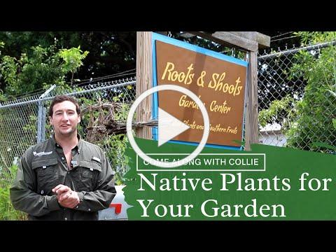 Come Along with Collie: Native Plants with Roots & Shoots