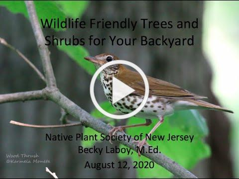 Wildlife Friendly Trees and Shrubs for Your Backyard