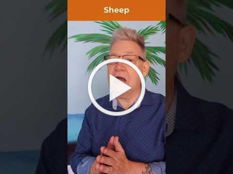 Sheep humor