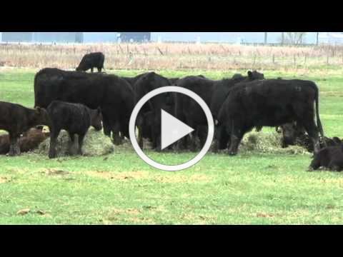 Utah Beefscapes