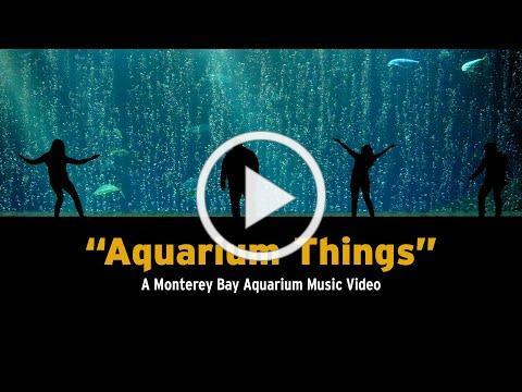 """""""Aquarium Things"""" - A Monterey Bay Aquarium Music Video"""