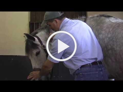 Horse Massage: Horses that Avoid or Push during Bodywork with the Masterson Method