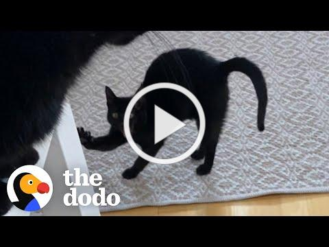Cat judges mom's quarantine habits
