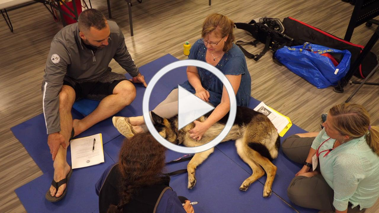 CRI Introduction to Veterinary Medical Acupuncture video