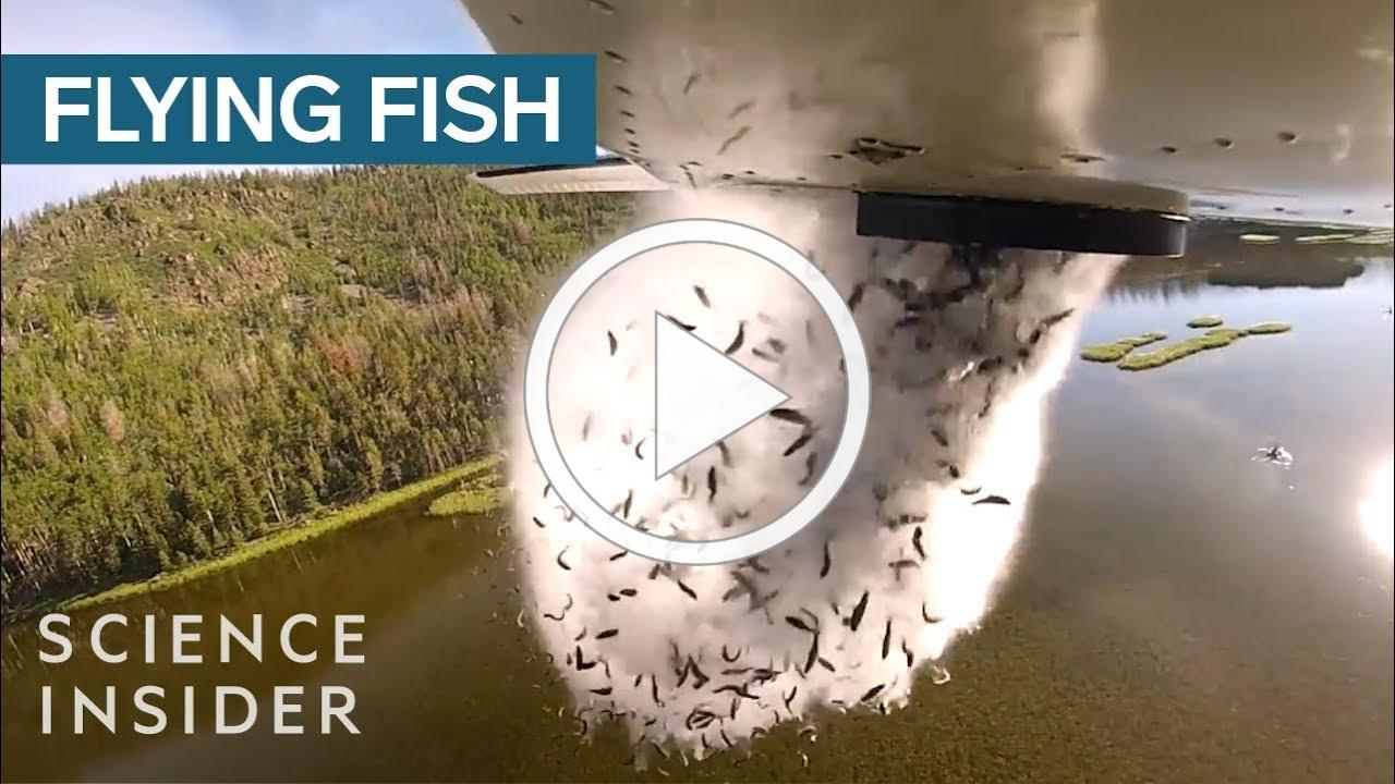 Why Utah Drops Fish Out Of Airplanes Into Their Mountain Lakes
