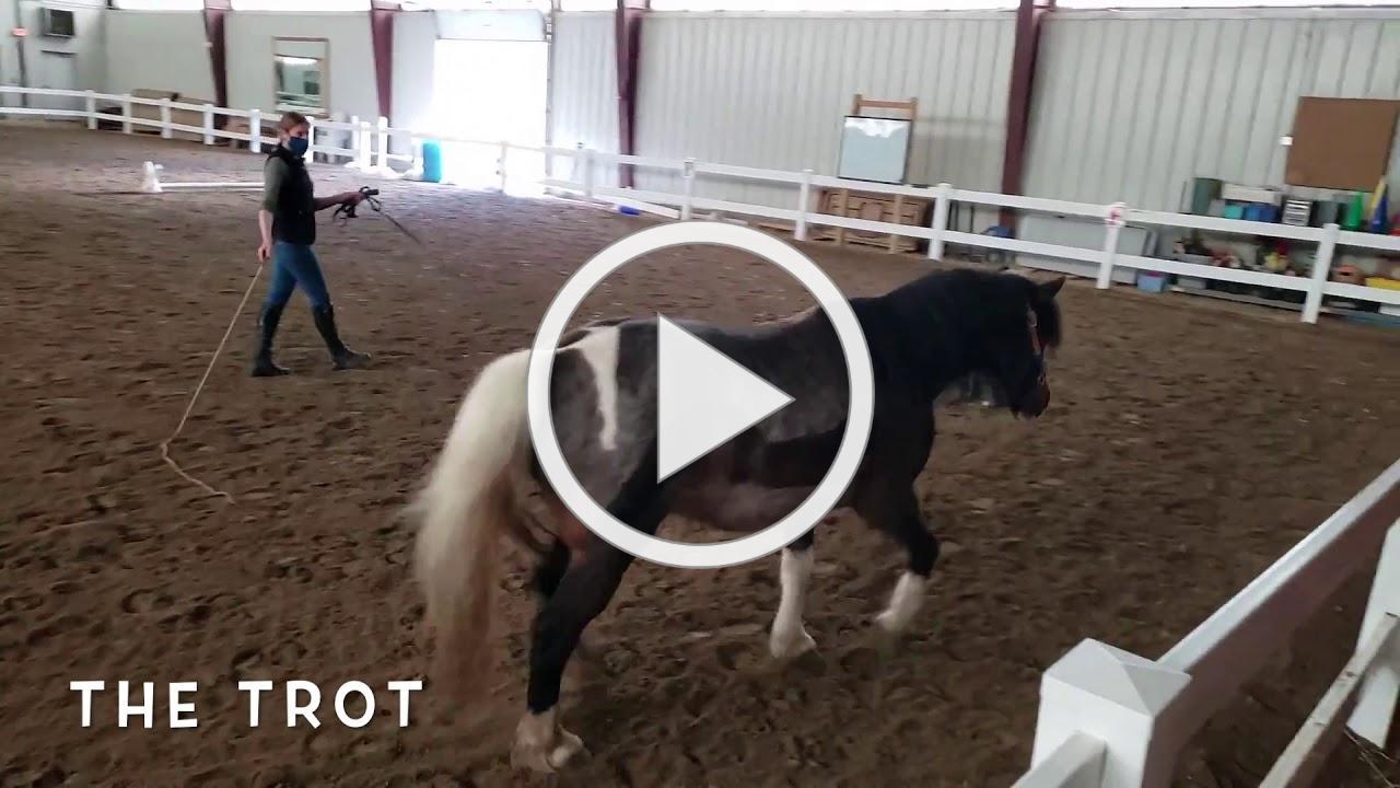 A Horse's Gaits!