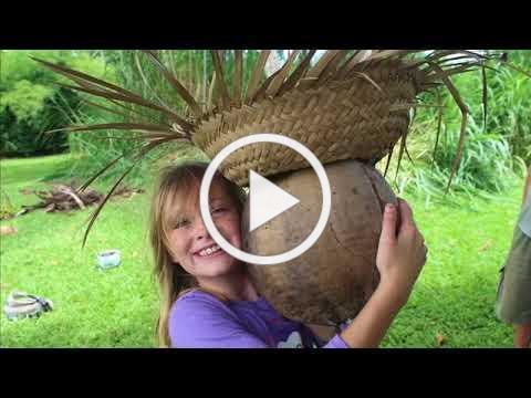 Harvesting Coconuts at Polestar Gardens