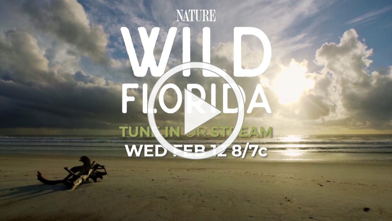 Official Preview | Wild Florida | NATURE | PBS