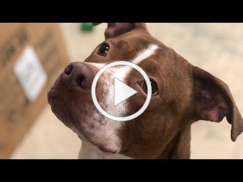 Adopt Rolph at Kitsap Humane Society!