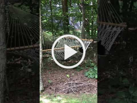 Bears! Bear swinging in my hammock!!