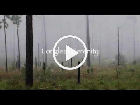 Longleaf Serenity- Foggy Morning