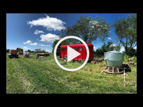 The Top 5 Questions About Pasture-Finishing Pigs - Farminar
