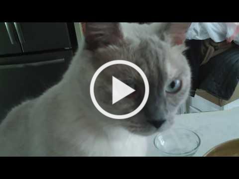 Blue, the Cat