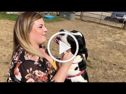 Adopt Ellie at Kitsap Humane Society!