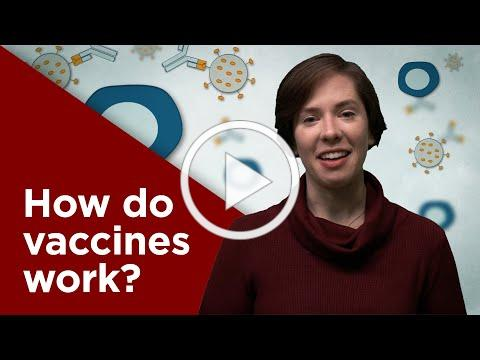 How do vaccines work?