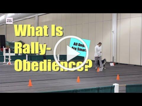 What Is Rally-Obedience?