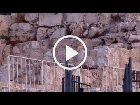שועלים בכותל Foxes at the kotel. 'עקיבא, ניחמתנו! עקיבא! ניחמתנו'