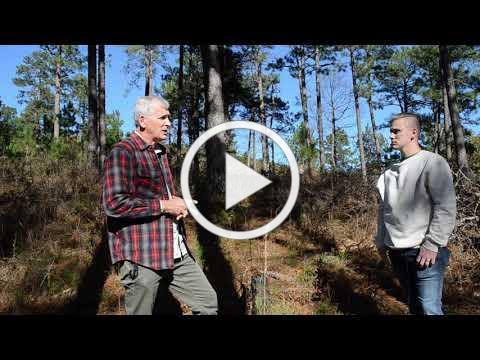 Montane Longleaf Pine Forests Risks, Mitigation, and Management