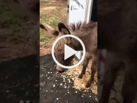 5 Baby Donkeys Saved by the Equine Rescue Network