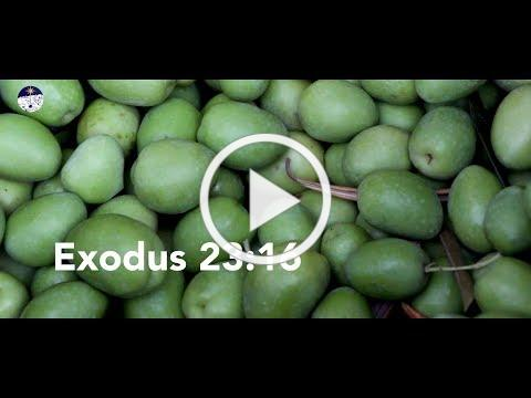 Bible Live: Joy of Harvest