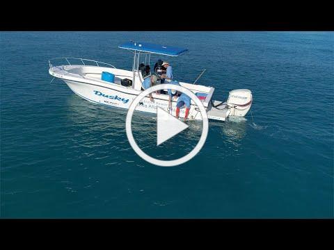 Internship Spotlight: Tracking Black Tip Sharks