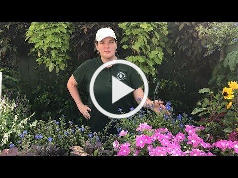 Heat Tolerant Plants For Summer