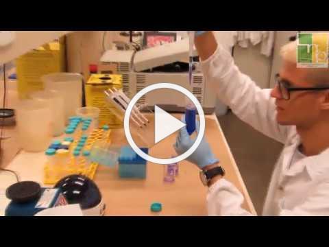 Lab of Neuroproteomics, UNICAMP, Brazil (English)