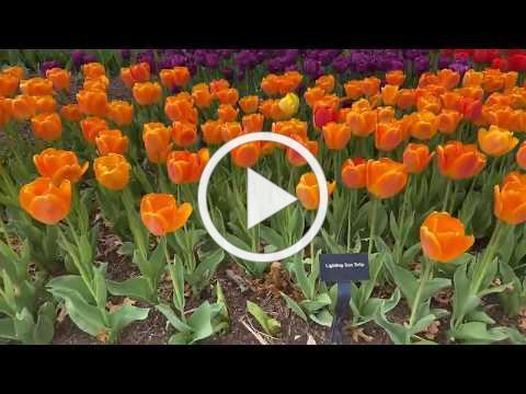 Home Safari - Zoo Blooms - Cincinnati Zoo