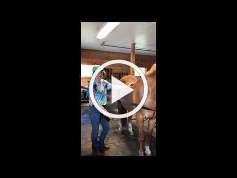 Grooming the Whole Horse - Part 2