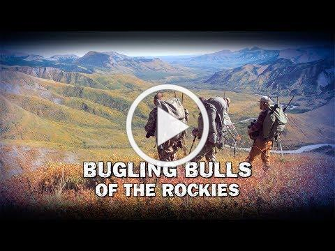 Bugling Bulls of the Rockies (TEASER)