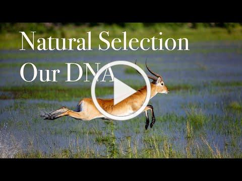 Natural Selection | Our DNA