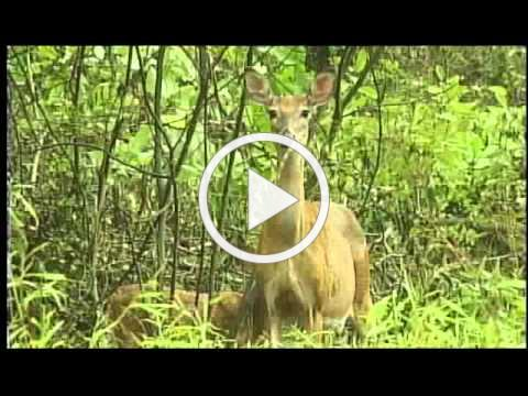 Deer Safety in Fairfax County