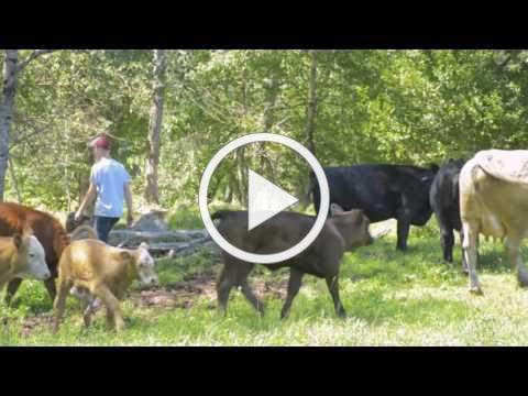 Growing Maine - Cedar Run Farm