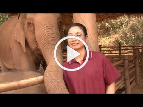 Interview with Khun Maw Sherry, Elephant Veterinarian