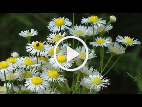 The Fullness of Summer - A Wild Blossoming