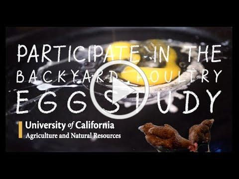 UC Backyard Chicken Egg Study