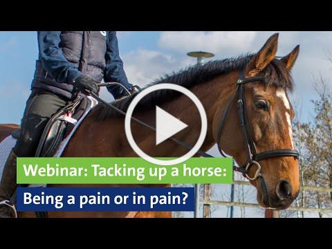 Webinar: Tacking up a horse: Being a pain or in pain