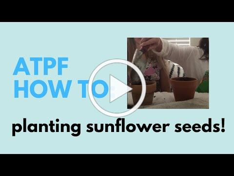 ATPF-NCL Volunteers Georgene & Kate Share How to Plant Sunflower Seeds